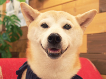 https://pshoken.co.jp/note_dog/img/shiba/dog_p001.jpg