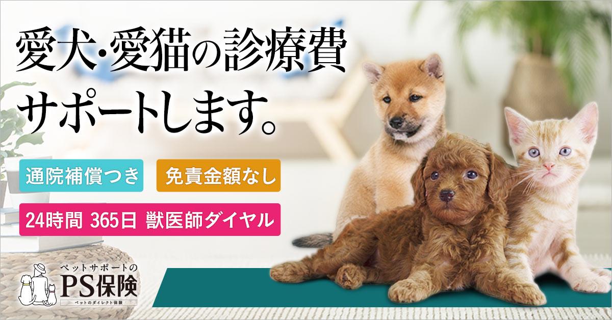 犬 糸球体疾患